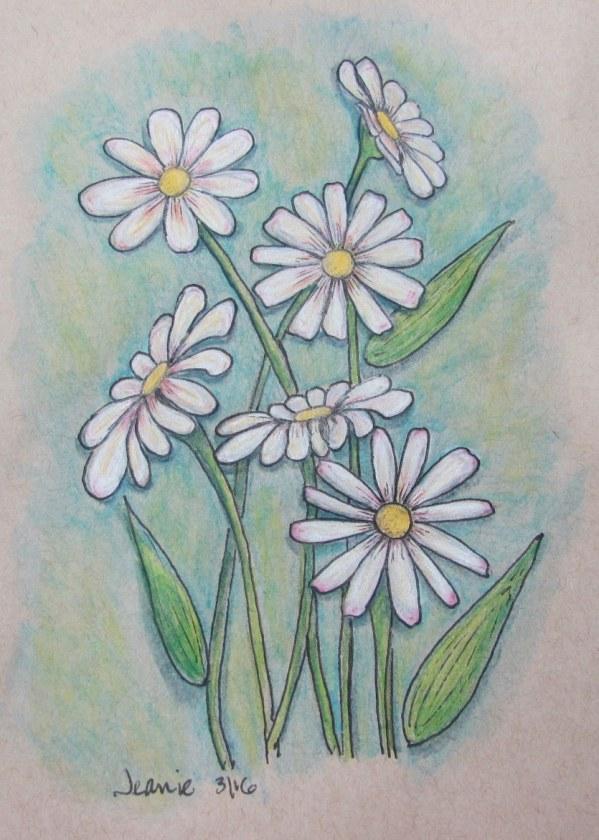 drawn daisies